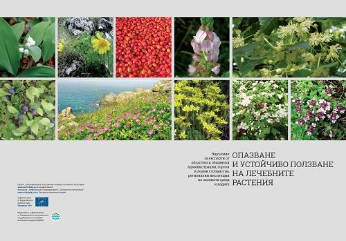 Резултат с изображение за Лековитото злато на България/ The Medicinal Gold of Bulgaria